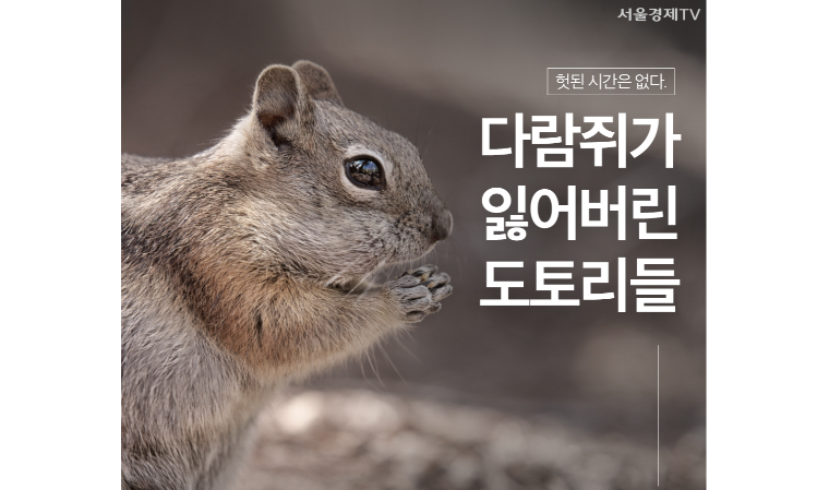 [SEN 버킷셀러] 다람쥐가 잃어버린 도토리들